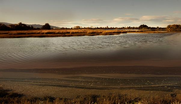 Motueka Estuary w..jpg