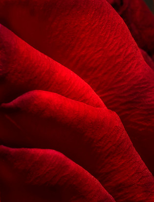 Folds of Red