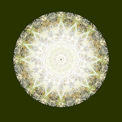 Dandelion Mandala