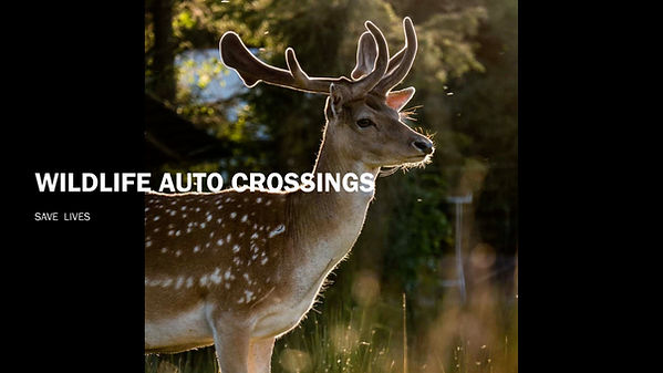 Wildlife Auto Crossings_Page_1.jpg