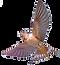 passarinho