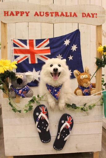 Australia Day Photoshoots
