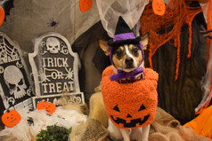 Spooky Halloween Photo