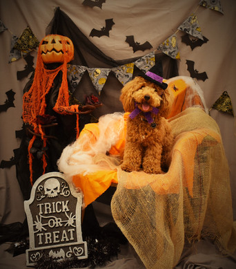 It's Howl-o-ween Time!