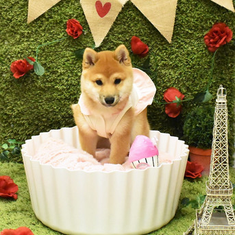 RSPCA Cupcake Day at Hachi 18th,19th & 20th August