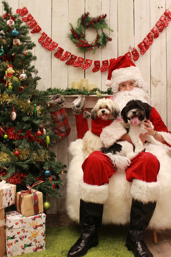 Christmas Photo Shoot                        Santa is coming to Hachi!