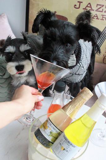 Hachi's Wine Pawty 23 & 24 June 2018