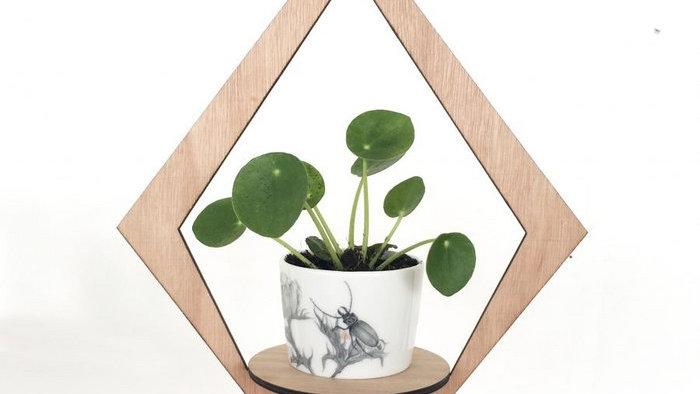 Eco PLanthanger