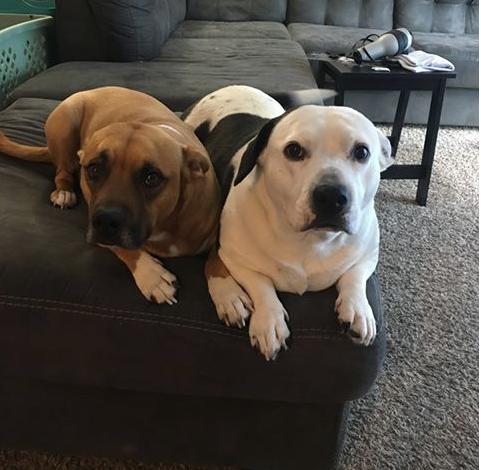 Duke & Daisy