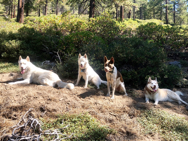 Off-leash Adventure Hike