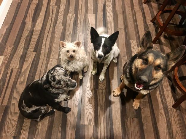 Doris, Chip, Fancy & Camarena