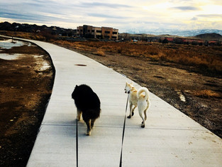 Zeus & Luna