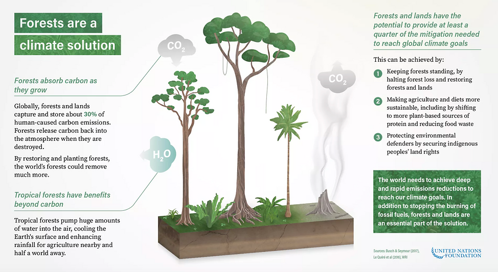 Forests are a climate solution IPCC