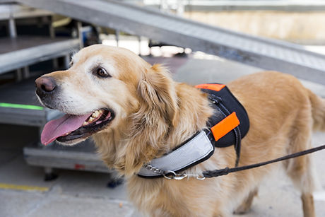 Assistance dog Training