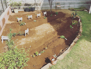 tavii Organic farm