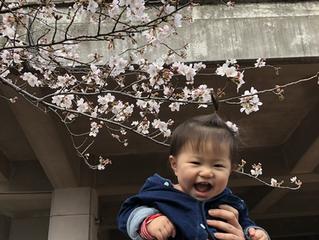 桜から考える🌸<気候変動>=<気候危機>は私たちの生活が影響している
