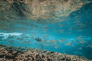 jakob-owens-FISH IN BRIGHT WATER.jpg