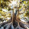 arbre com 18-19.jpg
