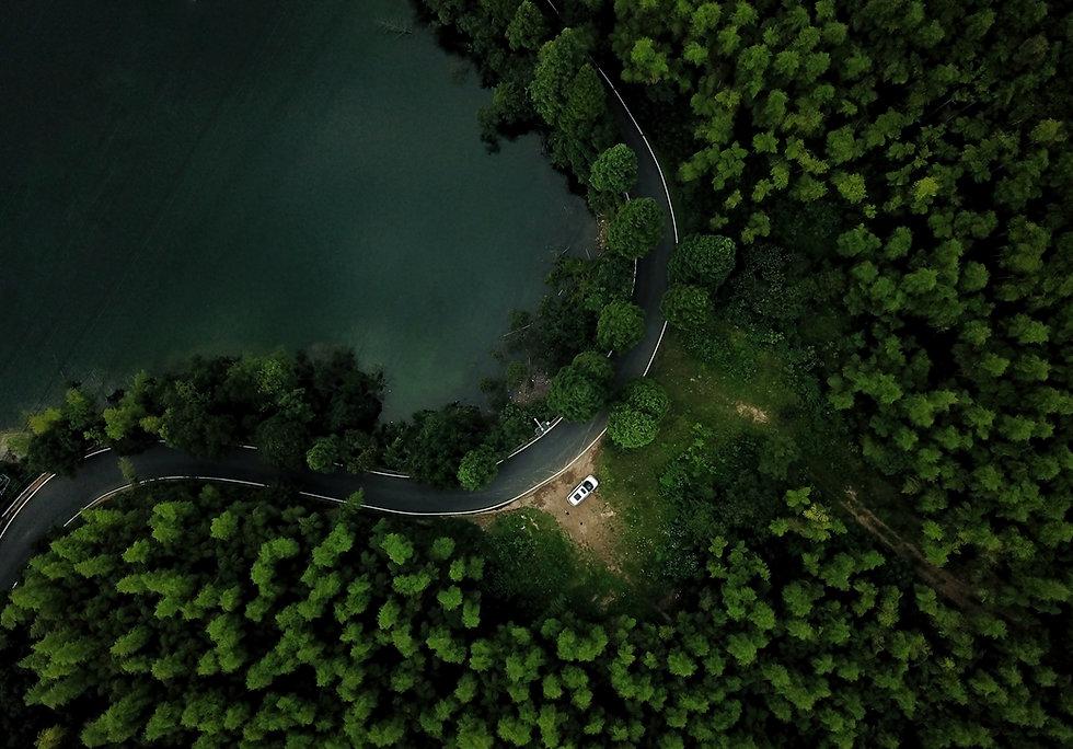 forest-4450611.jpg