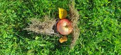 Omenaötökkä