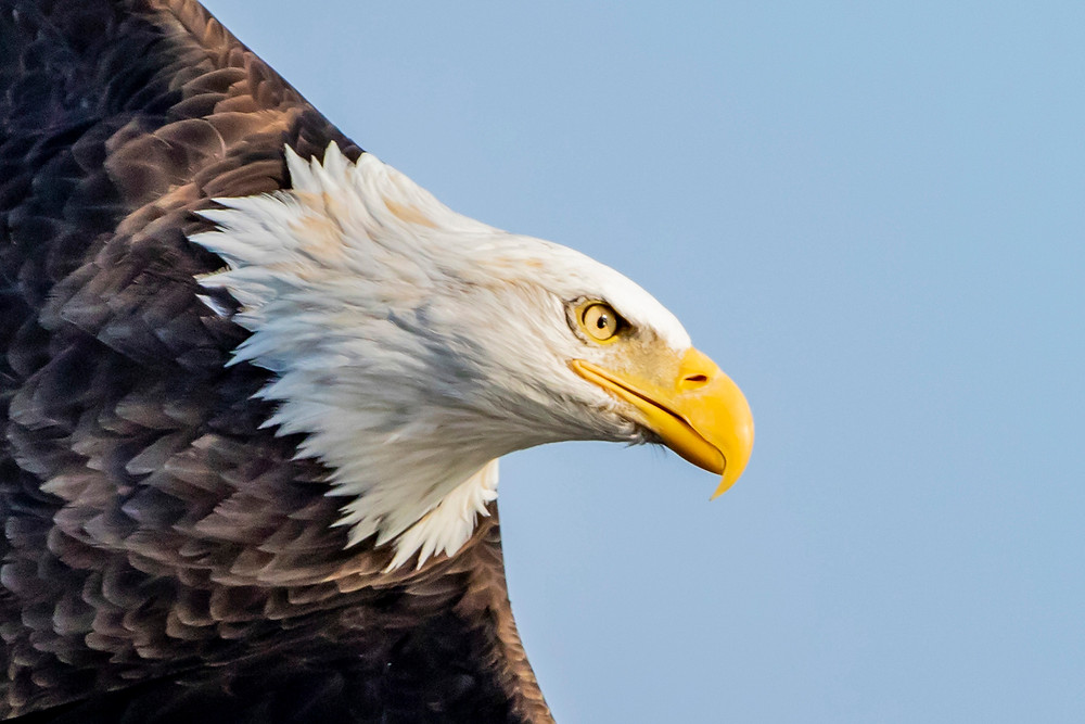 """Eagle Eye"" – Did you know that an eagle can spot a rabbit-sized creature from three miles away?  On Monday, April 8, at Tiskilwa's Museum on Main, local photographer Dave Horst will share his photos and observations about local wildlife, plus a few facts.  The event, beginning at 7:00 p.m., is free and open to the public."