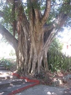 LES RYTHMES AFRO-CUBAINS, D'ORIGINE…