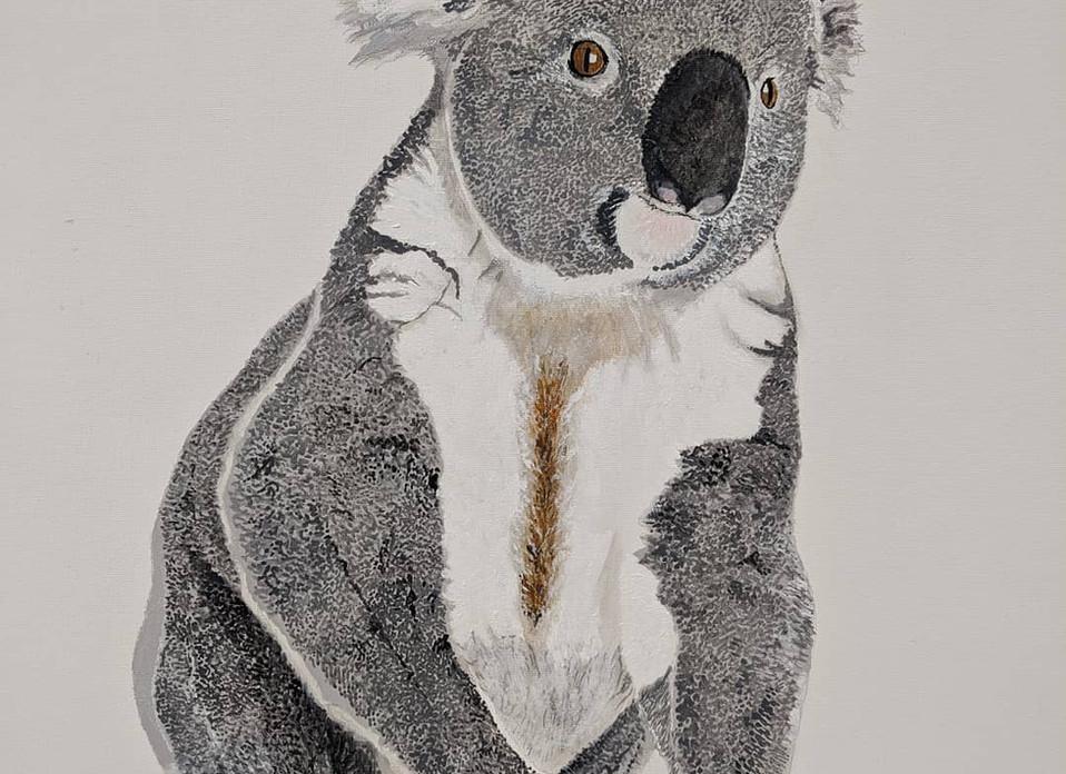 Richard Dowle_Koala.jpg
