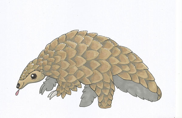 pangolin 2.jpeg