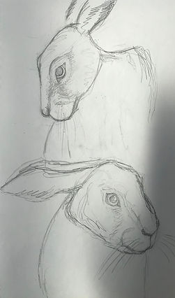 Hare sketches.jpeg