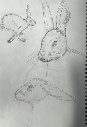hare sketches 2.jpeg