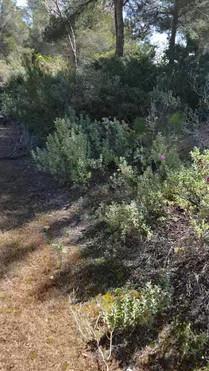 LC Mallorca Trail