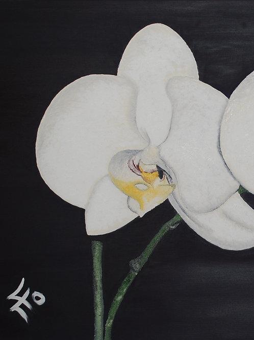 Arte&Cucina – Motiv »Orchidee«