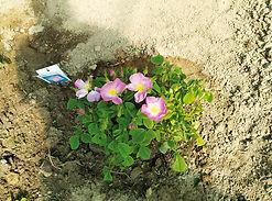 jardin_medieval_2.jpg
