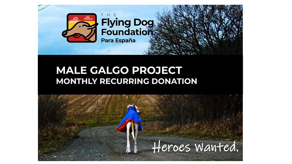 SOLD OUT - Male Galgo Project - Monthly Recurring Donation