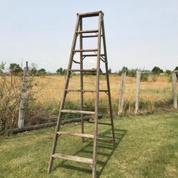 Ladder - $25