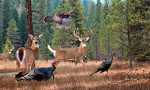 Two Bucks a Doe and Turkey pic.jpg