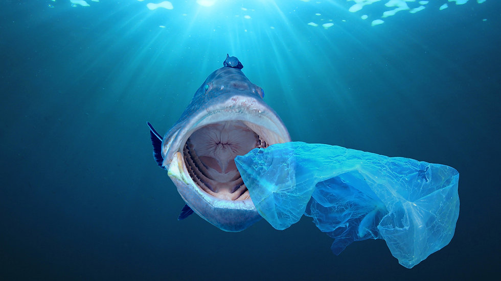 Fish Plastic Ocean.jpg