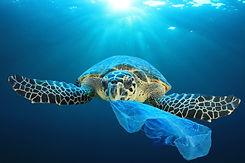 Turtle Ocean Plastic.jpg