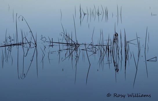 Swamp Geometrics.jpg