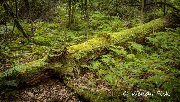 Kianga Rainforest.jpg
