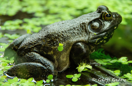 Frog in the tank.jpg