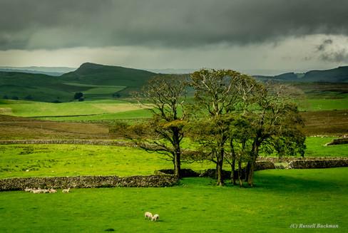 Trees of Yorkshire.jpg