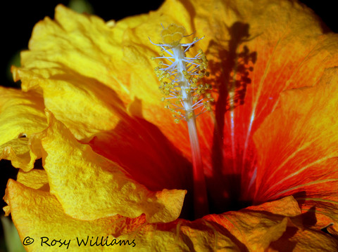 Flower Shadows.jpg