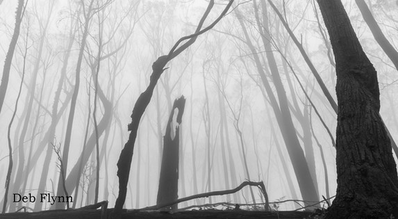 Destruction In The Mist.jpg