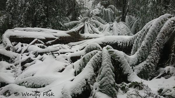 Bendoc rainforest winter wonderland.JPG