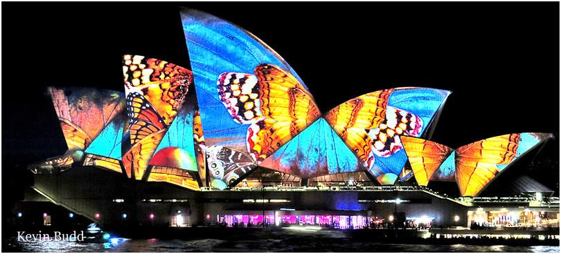 Butterfly Sails.jpg