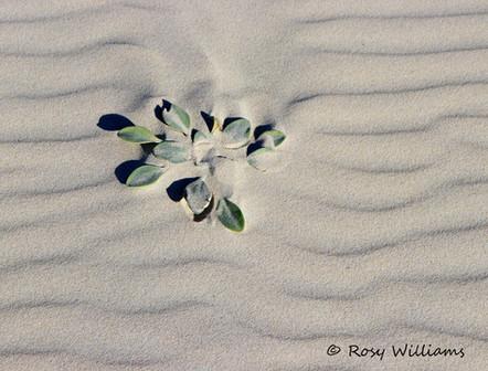 DunePlant.jpg