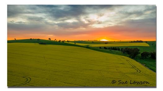 Dawn on the Canola.jpg