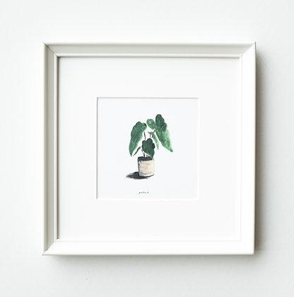 PLANTSERIES 3/3