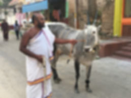 Cow and Brahmine.jpg
